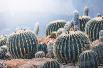 background nature. Natural Cactus Garden