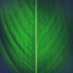 Background leaves green. Leaves green