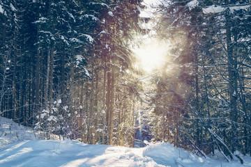 Waldstück im Winter mit der Morgensonne