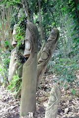 Tam tams-slit gongs of the Mage society. Ambrym island-Vanuatu. 6162