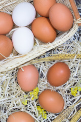 White and yellow eggs in a hay