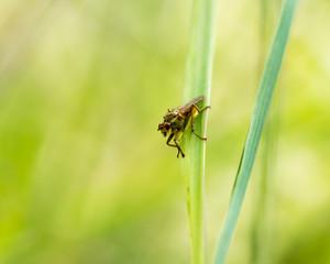 ladybug on grass macro