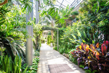 Botanical garden greenhouse exotic plants.