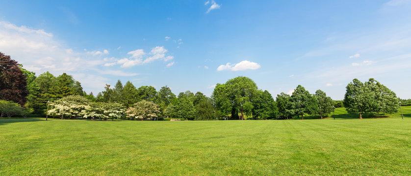 Fresh meadow landscape.