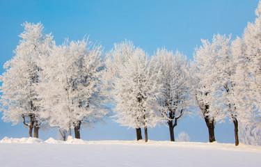 Bäume mit Eiskristallen und blauer Himmel