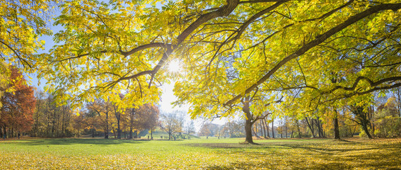 Panoramic image of the park English Garden in autumn, Munich, Germany. Shot against the sun.