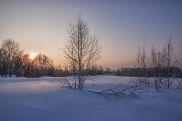 colorful winter sunset on snow field with forest and footsteps