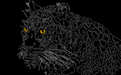 Leopard, Big Cat Illustration from India on Black Background
