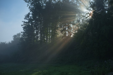 Sun rays shining through trees in the morning