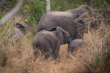 Familia de elefantes em plena selva