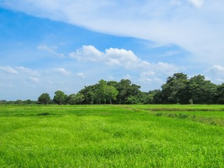 Beautiful Paddy Field with Trees and Blue Sky with clouds