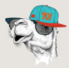 The image of the camel in the glasses and in hip-hop hat. Vector illustration.