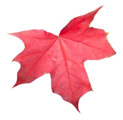 Fall Leaf Isolated