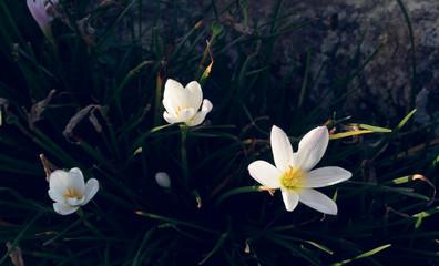 Flower bloom in light of morning sunlight vintage tone