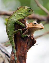 A chameleon and a frog sharing a tree trunk.
