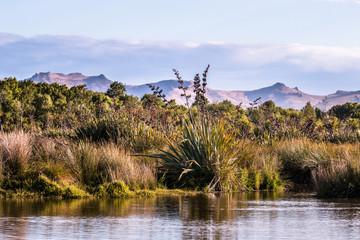 New Zealand native palnts on a lake shore