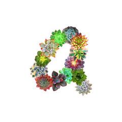 Succulent Letter A