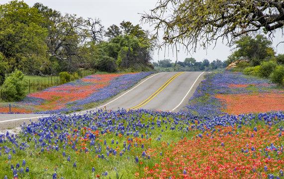 Spring wildflowers along Texas State Hwy 16 north of Fredricksburg