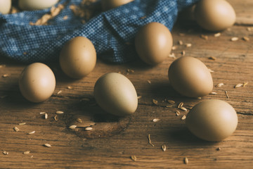 Group Of Eggs on Sawdust