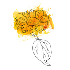 Freehand vector and watercolor drawing of yellow sunflower