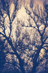 Leafless Tree Branches Retro
