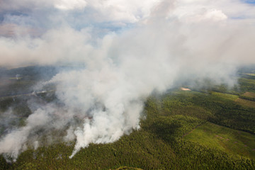 Wildfire in forest, top view