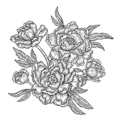 Hand drawn spring peony flowers and leaves isolated on white