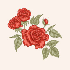 Red rose flowers and leaves in vintage style. Hand drawn vector