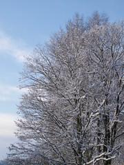Forest in winter/Hakuba,Japan