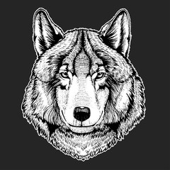 Vector wild wolf for tattoo, t-shirt, sport logo