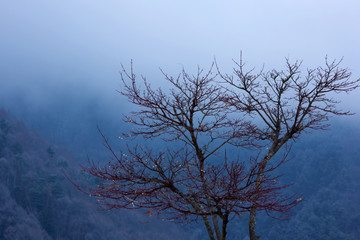 Solitary tree without leaves on a background of the misty mountains in the winter.