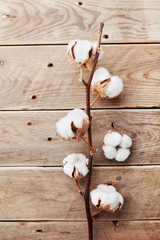 Beautiful white cotton flowers on rustic wooden table top view, flat lay.