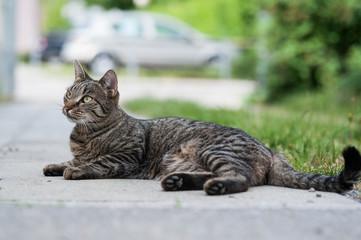 Katze liegt im Hof