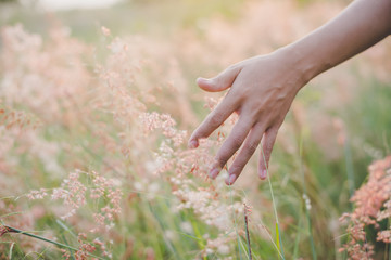 Woman's hand touch the grass in field at sunset . Rural and natu