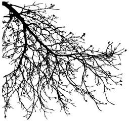 Dry tree, dead tree with beautiful branch silhouette. Suitable as reference for art and design work. Close up details of twisted tree branches.