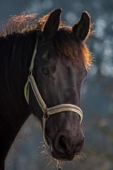 black horse in setting sun