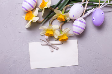 Decorative violet eggs  and yellow daffodils or narcissus flower