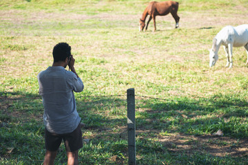 An asian man taking a photo of horses in a green nature farm