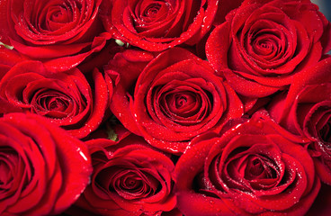 fresh red roses background.