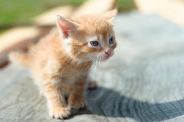 plaintive look of homeless ginger cat
