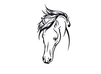 belle tête de cheval
