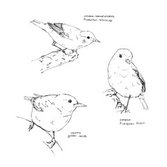 hand drawn collection of graphic birds on white background