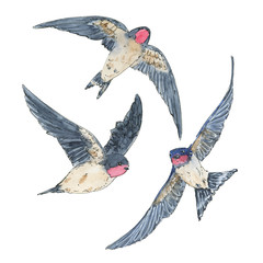 hand drawn set of watercolor isolated bird swallow on white back