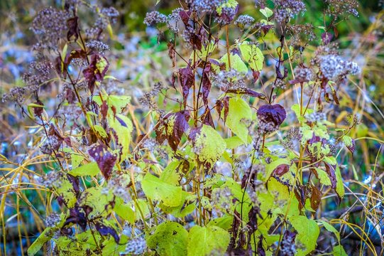 Purple and Green Plants
