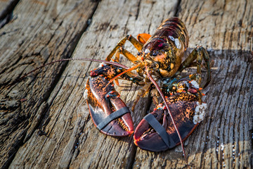 A lobster on wood.