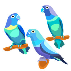 parrot lovebirds couple sitting head turned blue.