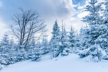 Winter forest with cloudy blue sky