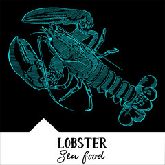 Hand drawn, vector illustration, design for a seafood restaurant menu. The picture shows the lobster on a black background.