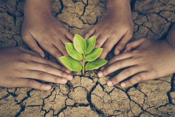 Hands of young people looking after a young green plant growing on dry, cracked ground. Protect nature