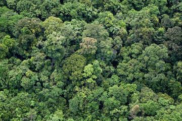 WWF Heart of Borneo